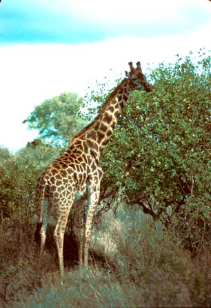 Kenya Travel Pictures